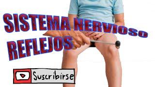 El los humano en nervios cuerpo
