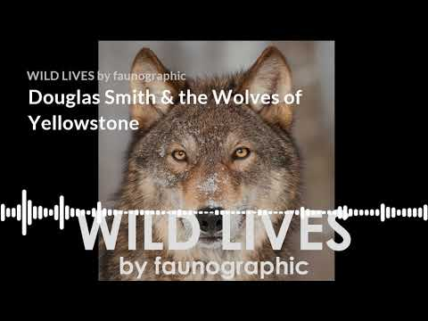 Episode 1: Douglas Smith & the Wolves of Yellowstone