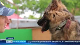 Четыре собаки пополнили ряды кинологической службы Тюмени