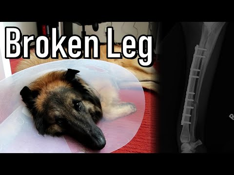 Sad Story | How My Dog Broke His Leg | 1 Year After
