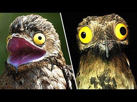 10 Tiere mit verrückten Gesichtern