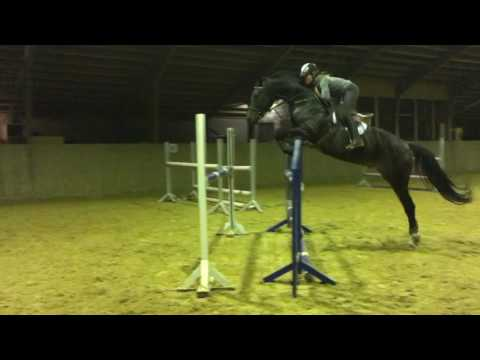 Horse show jumping training up to 130 cm