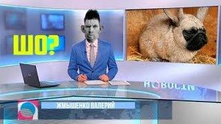 ТЕСТ НА ПСИХИКУ  МНОГО СЕКУНД СМЕХА
