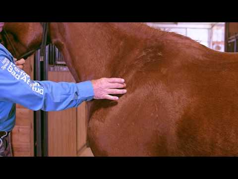 Equine Massage -  2nd Shoulder Meridian Line