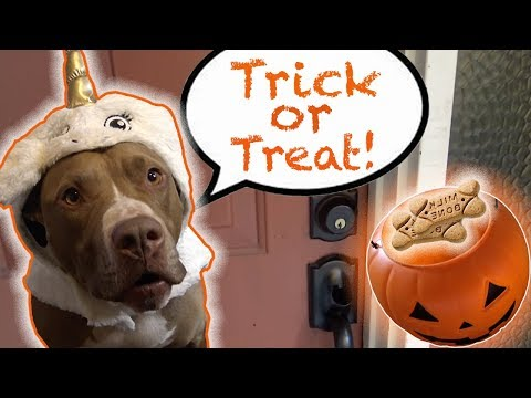 penny-goes-trick-or-treating!-|-rob-and-penny