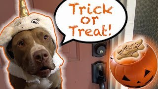 Penny goes Trick or Treating! | Rob and Penny