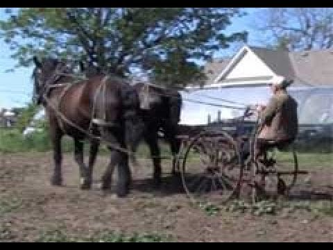 Horse Powered Organic Farming at Karbaumer Farm
