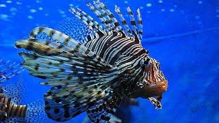 Океанариум#3: Подводный мир.