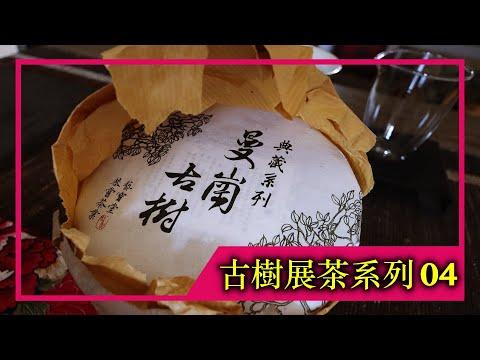 《古樹展茶系列》EP.04|2021年曼崗古樹純料(4K UHD)【藝寶堂台灣張哥】