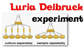 Luria delbruck experiment