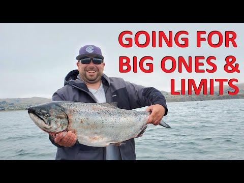 Salmon Fishing Bodega Bay W/ WHALES All Around Us