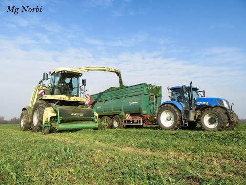 Pinkamenti Agrár Kft. 2016 Rozs silózás(Krone BigX 700, 3x New Holland T7, 3x MTZ, 2x Rába 250)