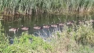 De natuur in de Aalanden Zwolle