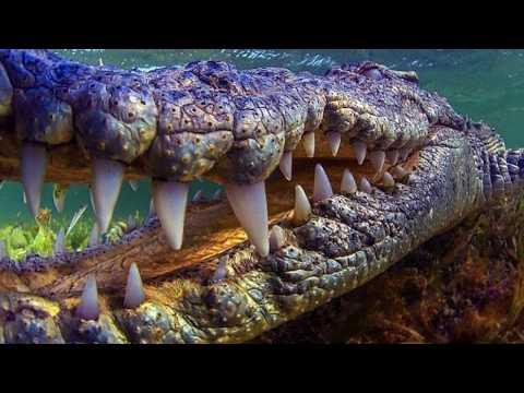 Dinosaurs Still Living Today - 3 More Prehistoric Creatures Still Living With Man