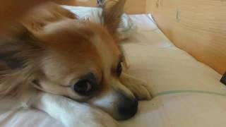 Реакция собаки на клип Тимати и Крида