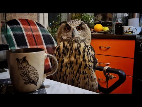 Кофе с совой, интернет с совой, квартира с совой - всё с совой, когда нельзя выйти из дома