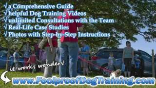 Canine Solutions Training Services - Dog And Puppy Training