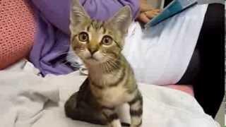 Котёнок со Стал. рынка-ПОЧТИ здоров!!!