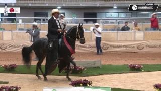 43a ExpoOriente Grado A Asdesilla 2019 Día 3