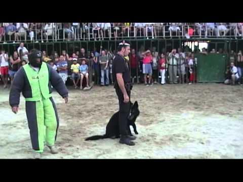 Exhibición unidades caninas policias locales en Peñiscola 2011