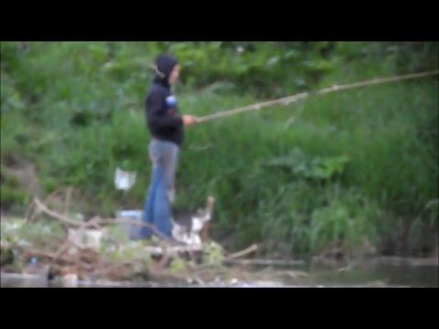видео: Любимый КОТ РЫБАКА рыбачит вместе с хозяином (Приколы на рыбалке 2016).