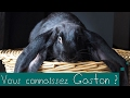 (Vlog animaux) GASTON mon lapin bélier anglais !
