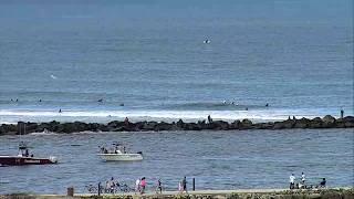 Live Surfline Florida Cam Captures Spinner Sharks