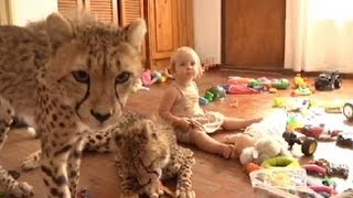 Toddlers Live With Cheetahs Video: 'Cheetah House' Documentary Follows S. African Family