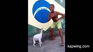 Dog dancing and singing