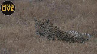 safariLIVE - Sunrise Safari - September 14, 2018