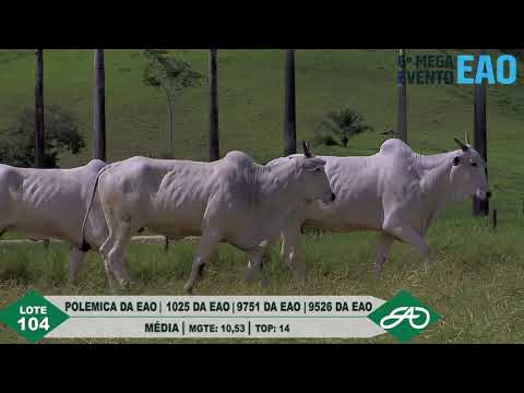 LOTE 104