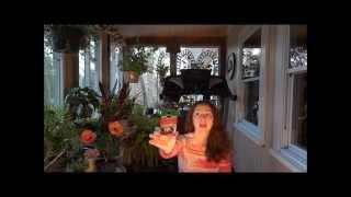 Орхидеи 2-Как правильно ухаживать за орхидеями. Полезные советы!(Как правильно ухаживать за орхидеями. Полезные советы! Что бы орхидея зацвела ей в первую очередь необходи..., 2014-01-12T22:12:25.000Z)