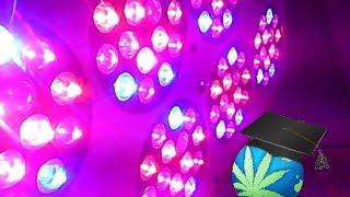 LED Grow Light Basics - Choosing A Light Guide
