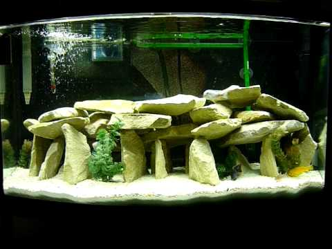 African cichlid aquarium youtube for African cichlid rock decoration