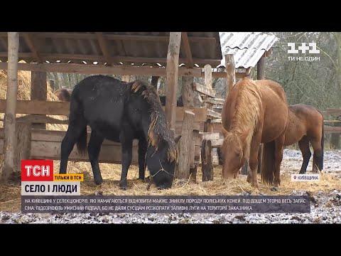 ТСН: У Київській області селекціонерам спалили зимовий запас сіна для табуна коней