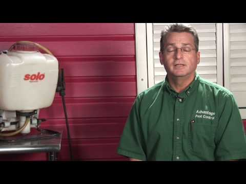 pest-control-:-how-to-kill-water-bugs