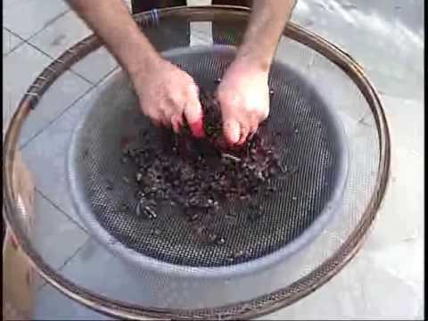69cddbd01 Fabricação de vinho caseiro 1 - YouTube