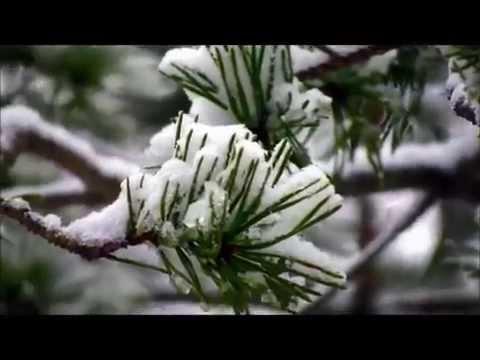Kar Şiiri- Sezai Karakoç