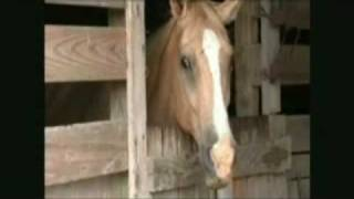 Repeat youtube video Man rapes a horse