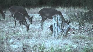 Whitetail Deer Fever Big Time
