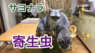 尻尾で遊んであげながら・・・バイバイ!寄生虫~(* ̄▽ ̄)ノ~~ ≪猫 Cat≫