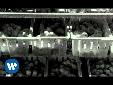 Grzegorz Z Ciechowa - Piejo Kury Piejo [Official Music Video]