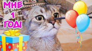 ДЕНЬ РОЖДЕНИЯ КОТЁНКА ЧЕРНОРЫЖА 1 ГОД! CAT