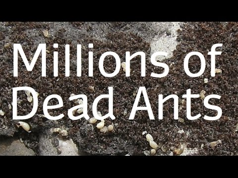 How Do You Get Rid Of Ant Hills