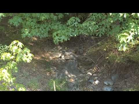 20 Acre Placer Gold Claim For Sale in So. Oregon (SOLD AS OF 9/8/21)