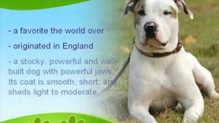 American Bulldog History