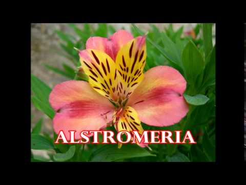 Popular Flowers you can Import from Kenya Flower Farms