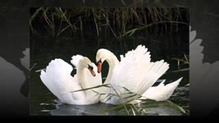 Поздравление с годовщиной свадьбы! online video cutter com