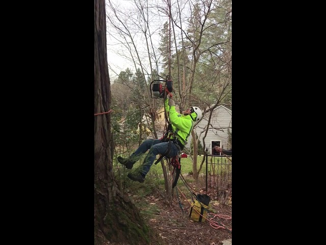 Nevada City Redwood Removal