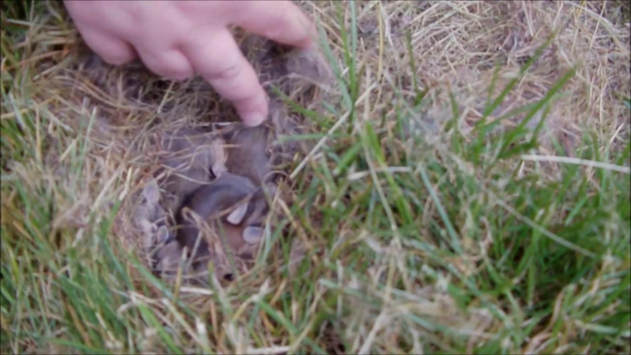 I found wild baby bunnies in my backyard!!!! - YouTube
